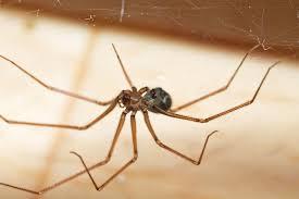 הדברת עכבישים מחיר