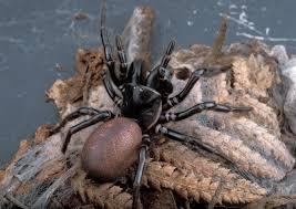 הדברה של עכבישים